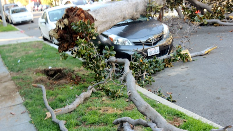 Hollywood Landscape Falters Under Strong and Gusty Winds