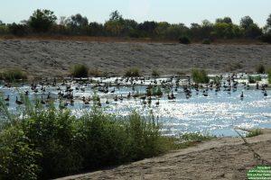 LA River Paddle 020
